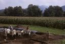 Coweeta Creek Mound (Ma 34), Crew at Work, Macon Co., North Carolina, United States (RLA image 22848.jpg)