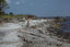 Moores Beach (Bf 37), Site P6 (Moore), Beaufort Co., North Carolina, United States (RLA image 22503.jpg)