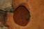 Nassaw-Weyapee (SoC 643), Feature 58, Excavated, York Co., South Carolina, United States (RLA image D10226.jpg)