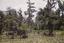 Kinloch Plantation, Iris Pond, South Carolina, United States (RLA image 22580.jpg)