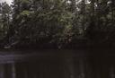 Waccamaw River, Lower Terrace at Vaughts Landing, SC, South Carolina, United States (RLA image 22579.jpg)