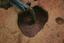 Nassaw-Weyapee (SoC 643), Feature 57, Excavated, York Co., South Carolina, United States (RLA image D10024.jpg)