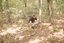 Hardaway Site (St 4), Brad at Hardaway, Stanly Co., North Carolina, United States (RLA image 22739.jpg)