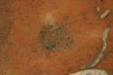Nassaw-Weyapee (SoC 643), Feature 51 (Cob-Filled Pit), Top, York Co., South Carolina, United States (RLA image D10107.jpg)