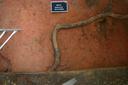 Nassaw-Weyapee (SoC 643), Sq. 601R545, Top of Subsoil (Mosaic Photo), York Co., South Carolina, United States (RLA image D10140.jpg)
