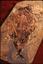 fossil.jpeg-2