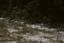 Haag's Bf 8 (SoC 597), Haag Site Bf8 (George Shultz), Beaufort Co., South Carolina, United States (RLA image 22587.jpg)
