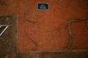 Nassaw-Weyapee (SoC 643), Sq. 601R544, Top of Subsoil (Mosaic Photo), York Co., South Carolina, United States (RLA image D10138.jpg)