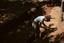Hardaway Site (St 4), Digging, Stanly Co., North Carolina, United States (RLA image 22712.jpg)