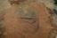 Nassaw-Weyapee (SoC 643), Feature 52, SE Half Excavated, York Co., South Carolina, United States (RLA image D10038.jpg)