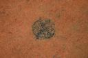 Nassaw-Weyapee (SoC 643), Feature 50 (Cob-Filled Pit), Top, York Co., South Carolina, United States (RLA image D10120.jpg)