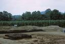 Coweeta Creek Mound (Ma 34), General View of Excavation, Macon Co., North Carolina, United States (RLA image 22818.jpg)