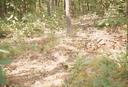 Hardaway Site (St 4), Potting Damage, Stanly Co., North Carolina, United States (RLA image 22740.jpg)