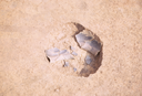 Coweeta Creek Mound (Ma 34), Feature 32, Macon Co., North Carolina, United States (RLA image 22839.jpg)