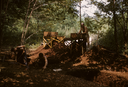 Hardaway Site (St 4), Phelps and Crew Digging and Sifting, Stanly Co., North Carolina, United States (RLA image 22695.jpg)