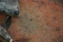 Nassaw-Weyapee (SoC 643), Feature 58, Top, York Co., South Carolina, United States (RLA image D10168.jpg)