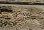 Coweeta Creek Mound (Ma 34), General View of Excavation, Macon Co., North Carolina, United States (RLA image 22812.jpg)
