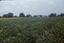 Handy's Point (Bf 23), Site P35 (Pamticough), Beaufort Co., North Carolina, United States (RLA image 22516.jpg)