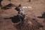 Wall Site (Or 11), Digging Feature 47, Orange Co., North Carolina, United States (RLA image 22662.jpg)
