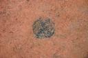 Nassaw-Weyapee (SoC 643), Feature 50 (Cob-Filled Pit), Top, York Co., South Carolina, United States (RLA image D10119.jpg)