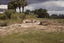 Haag's Ch 7 (SoC 649), Haag Site Ch7 (Porcher's Bluff), Charleston Co., South Carolina, United States (RLA image 22602.jpg)